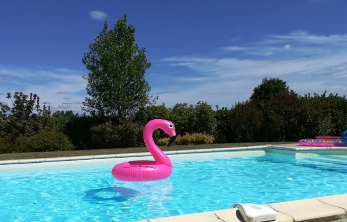 Love the pink flamingo!