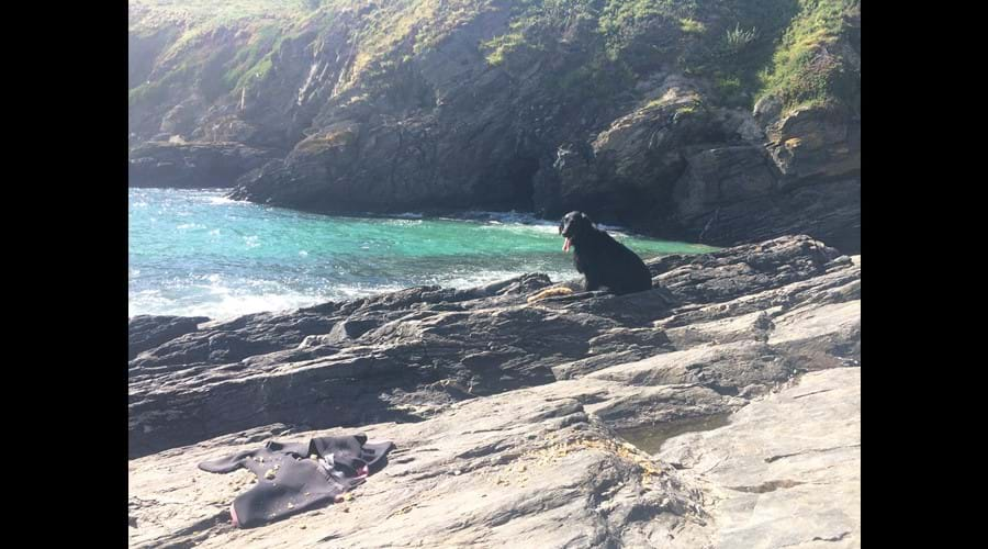 Lots of local dog friendly coves to explore
