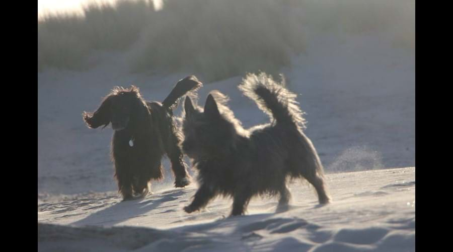 Happy dogs on Nairn Beach