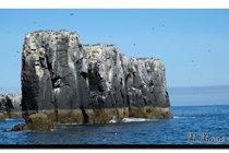 Seabirds nesting, Farnes. David Attenborough