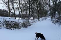 Halwin Lane in the snow