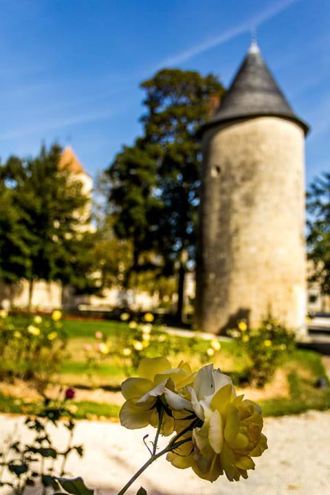 Flowers in the garden park area, of castle ground in Surgeres