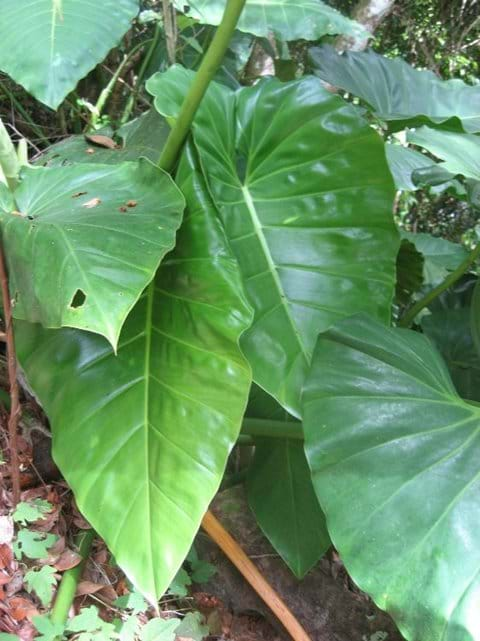 Interesting shaped leaves
