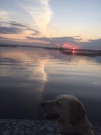 Even a Golden Retriever can enjoy a sunset !