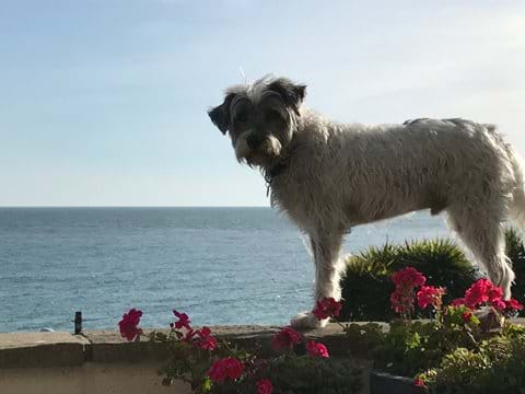 Derek patrolling the perimeter wall and enjoying the sea view