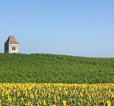 View of pigeonniere and sunflowers