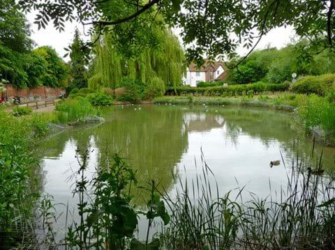 Swan Meadow Pond in in June 2012
