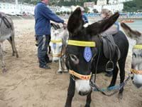 Donkeys at Llandudno