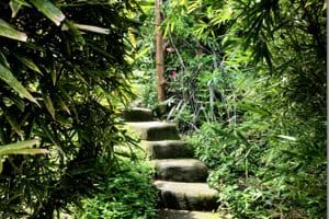 One of the many stairs in the garden, linking the former rice terraces