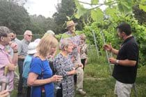 Visit to Toppersfield Vineyard on 3 August 2019