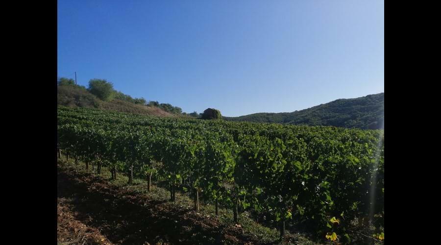 Autumn vineyards in Broquies