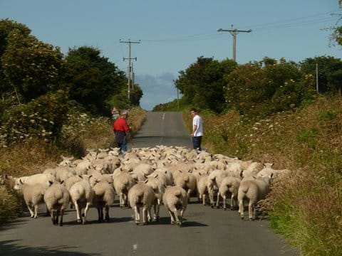 Moving the flock to pastures new