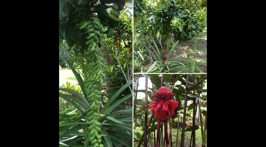 With over 2 acres to explore, you will love our tropical gardens.