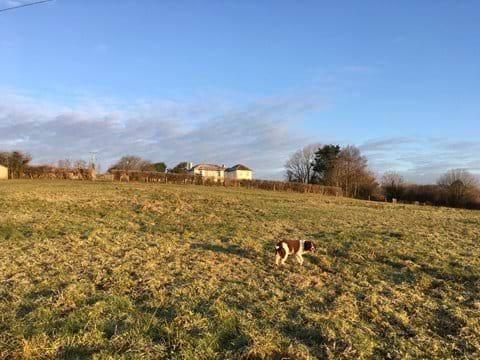 A winter shot of the dog paddock