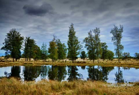 The stunning Aekingerzand, part of the Drents-Friese wold
