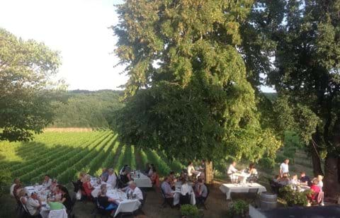 Wine tasting dinner in the vines