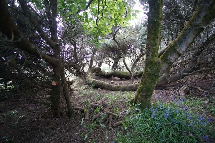Cosy corner of the garden