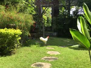 Tuin met poort naar zwembad-terras