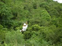 Tropical Rainforest Zip Wires!