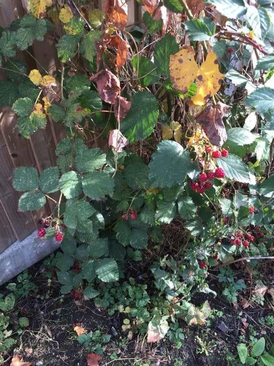 Fruit from the garden