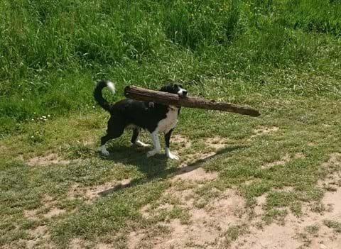 Vakantiehuis Dordogne Met Hond
