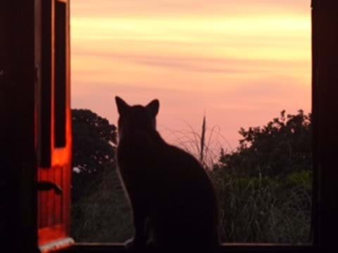 watching the evening sunset from the Bothy door
