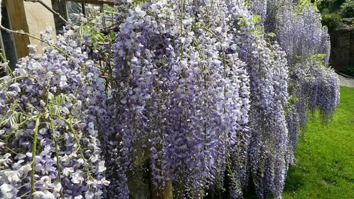 Wisteria| Nutcombe Cottage| Nutcombe Holiday Cottages