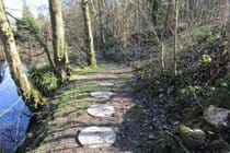 Stepping stones along the riverbank
