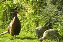 Regular garden visitors
