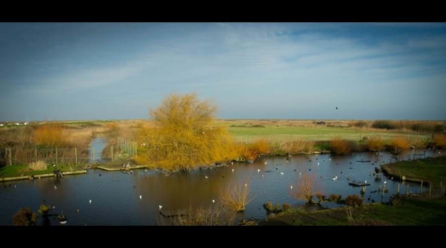 The bird reserve Blakeney