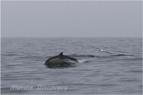 Wildlife spotting with Marine Discovery