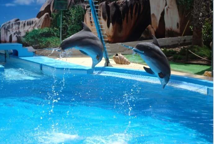 Zoomarine Dolphins