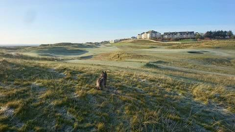 "please see ""golf"" page for dog-friendly golf courses."