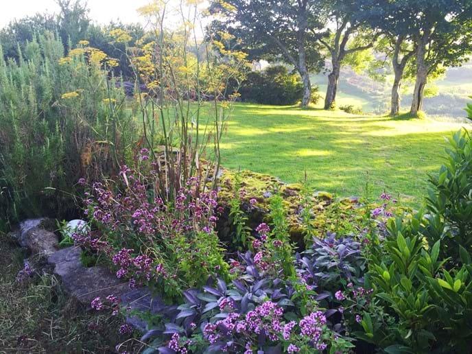 Garden at Crab Cottage