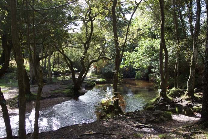 A walk along the Ober Water Trail - New Forest UK