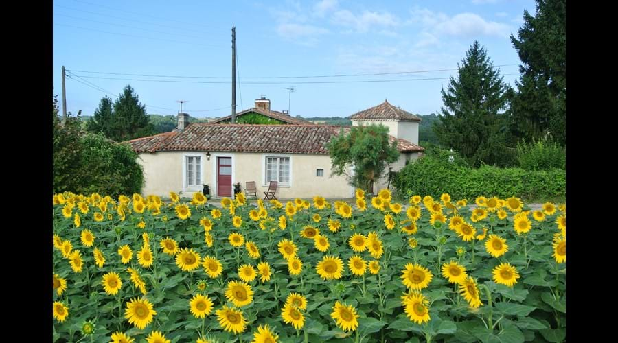 Gite La Fleurette - surrounded by sunflowers summer 2015