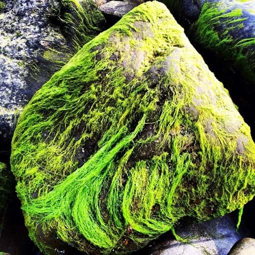 Banff Beach Stone