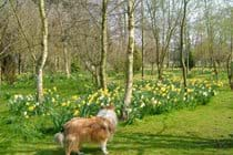 Garden in springtime, we are dog friendly