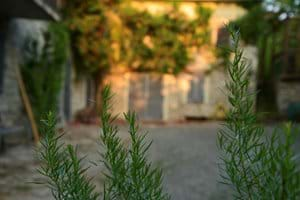 Courtyard and herb garden