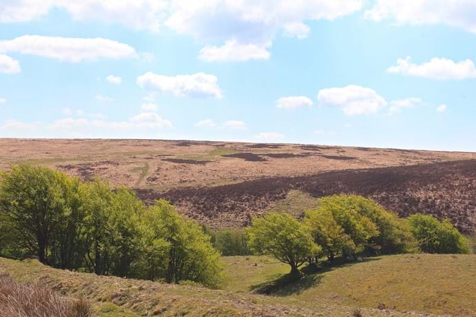 Brendon Common, Exmoor