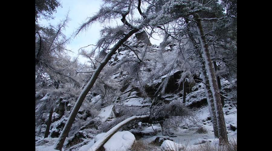 Wonderful wintry woodland at The Roaches