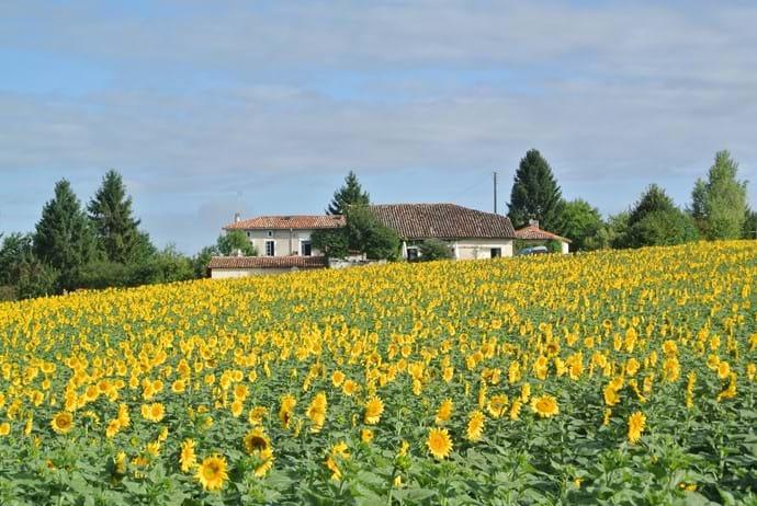 Chez Sarrazin Farm Summer 2015