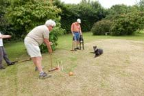 Croquet in the garden - with two happy greyhounds!
