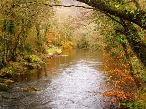 River Teign near Fingle Bridge