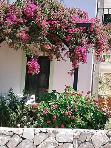 Bougainvillea abounds in this part of town