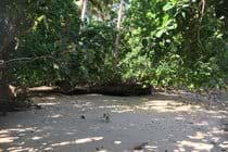 Another picnic venue where the jungle meets the beach.