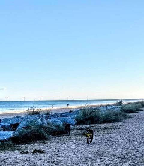 Dogs on Scratby Beach