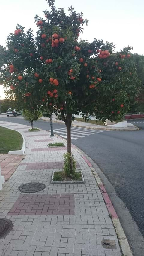 Oranges in the street outside the house