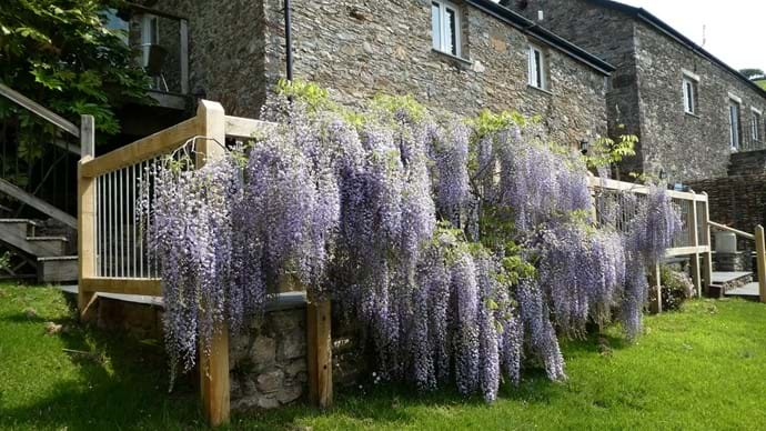 Wisteria|Nutcombe Cottage| Nutcombe Holiday Cottages