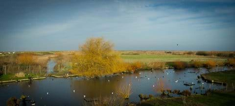 Bird Reserve Blakeney Quay